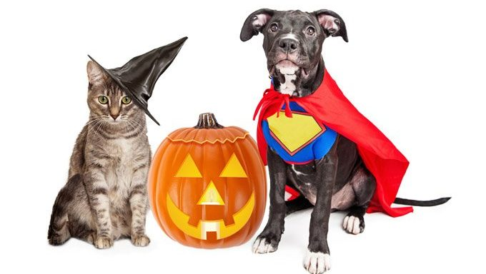 dog and cat in halloween costumes next to jack o lantern