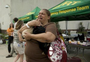 Keeping Pets Safe In A Disaster