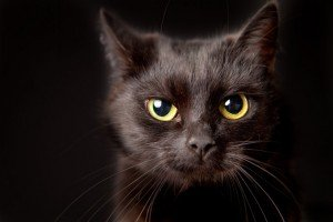 Black Cat Syndrome