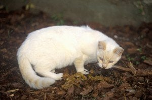 Breaking Your Cat Of A Nasty Habit: Bringing Dead Critters Into Your Home
