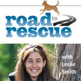 Dog rescue and animal rescue stories