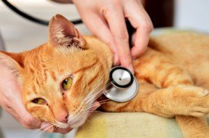 Cats And UTI (Urinary Tract Infections)