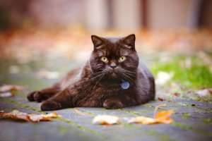 ID Tags, Microchips, And Your Cat's Safety