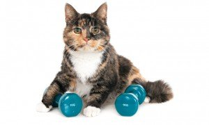 Keeping Your Cat Fit