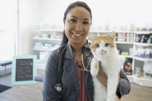 Cats And Kidney Disease: What You Need To Know