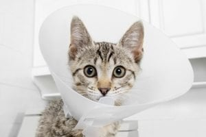 Cats And Mouth Cancer