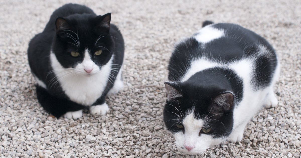 cat tuxedo names cats cattime colors personality outside markings curled means