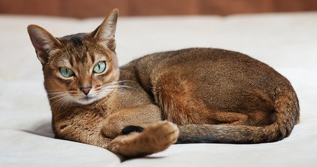 will a male cat stop spraying after being neutered