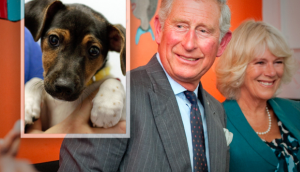 Charles and Camilla Adopt a Shelter Pup