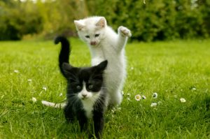 Why Kitten Socialization Is So Important