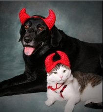 Top Pet Costumes for Halloween 2011
