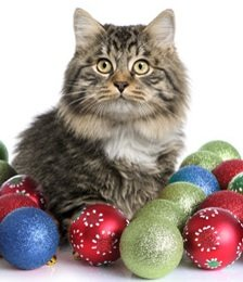 2011 Holiday Gift Guide for Cats and Their People