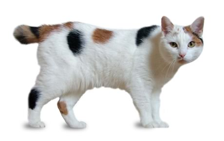 Are Male Cats Less Affectionate To Kittens