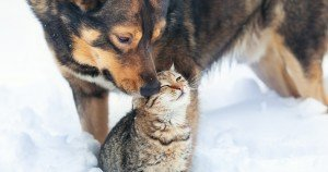 8 myths about pets and winter care