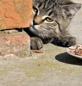 Search continues for missing cats