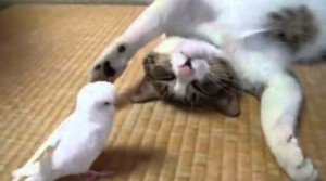 Cat Meets Bird And Falls In Love