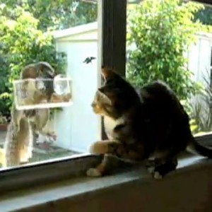 Cat And Squirrel: Why Can't We Be Friends?