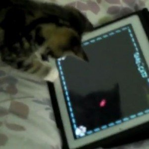 Kitten Plays The iPad