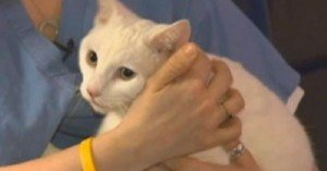Boston Cat Survives 19-Story Drop