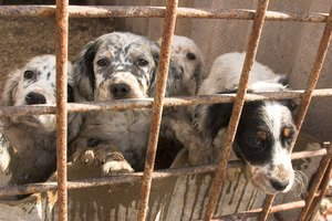 A California city fights puppy mills