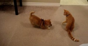 Cat meets dog