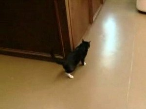 Child rescues cat from alleged abuse
