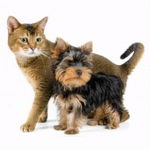 Five cat and dog videos for Friday, May 25, 2012