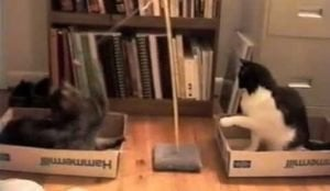 Cat Tetherball [VIDEO]