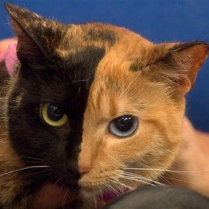 "Amazing ""two-faced"" cat featured on Today Show"