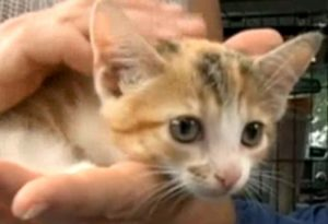 Kitten Takes An Unplanned 180-mile Road Trip In Car Engine