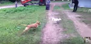 Cat Easily Outsmarts Dog [VIDEO]