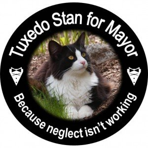 Cat runs for mayor in Nova Scotia