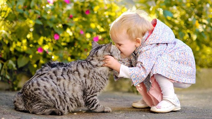 toddler kissing cat