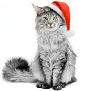 CatTime's 2012 Holiday Gift Guide