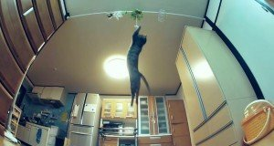 Nothing Can Rival The Jumping Cat [VIDEO]