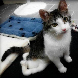 CatTime's top 10 cat news stories in 2012