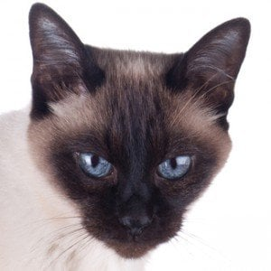 Top 10 most popular cats of 2012