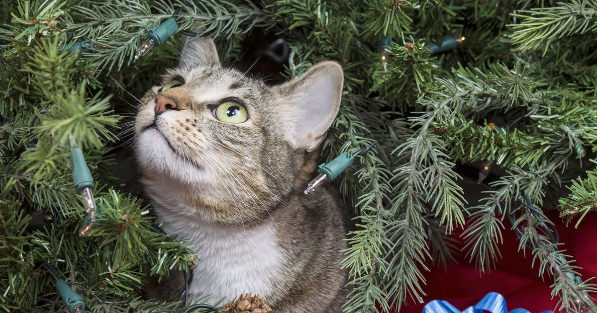 How To Keep Cats Off Christmas Tree