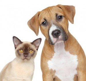 13 best animal rescue and advocacy campaigns for 2013