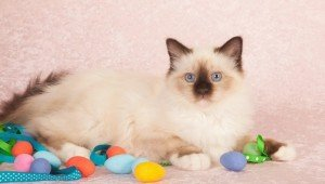 25 Cats Who Are Ready For Easter