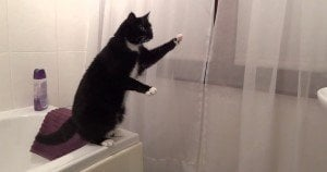 Smart Cat Poses For Mirror