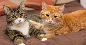 Adoption diary: Adding a cat to a family with an existing cat