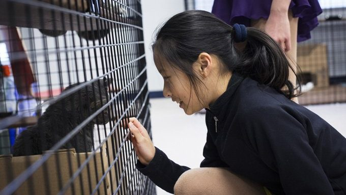 Woman looks at shelter cat