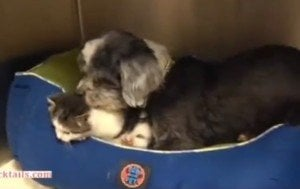 Dog Rescues, Then Adopts Orphaned Kitten