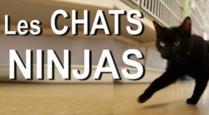 Look Out: Ninja Cats!