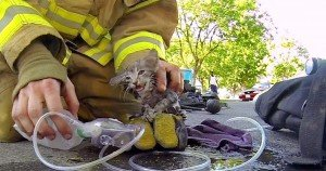 Fireman saves a kitten