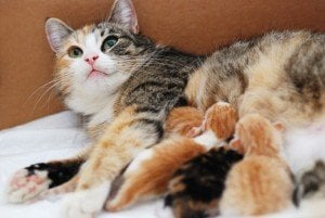 5 Reasons A Mother Cat Might Abandon Or Reject Her Young