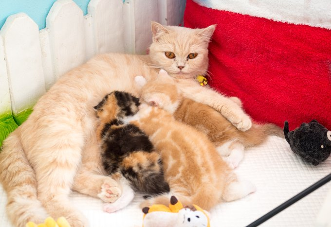 Mother Cat Abandon Kittens