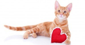 Ten Ways To Show Your Cats Love On Valentine's Day