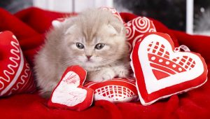 Tips To Keep Your Cat Safe This Valentine's Day